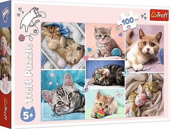 Image de PUZZLES IN THE CAT WORLD 16420